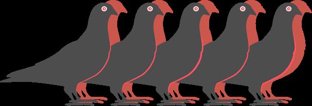 piccioni in fila